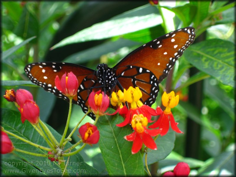 17 May 2010 11:31 104K Butterfly Garden Apr..u003e 17 May 2010 11:31 95K  Butterfly Garden Apr..u003e 17 May 2010 11:39 109K Butterflygarden Apri.
